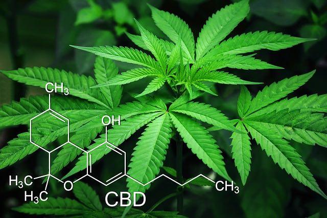 CBD et cannabis pour le bien être